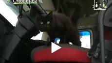 Видео про кошку-дальнобойщицу из Смоленска взорвало Сеть