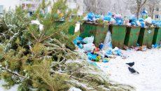 МЧС в Смоленске предостерегло от неправильного выбрасывания ёлки