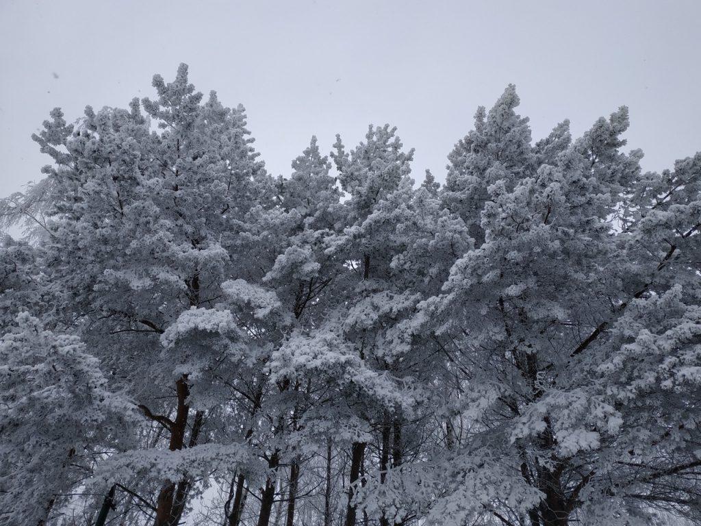 зима, снег, деревья, лес (фото 67.mchs.gov.ru)
