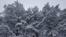 В первый рабочий день января в Смоленске похолодает