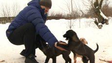 В Смоленске неизвестные пытались отравить щенков, няньками для которых стали водители маршруток