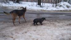 В Смоленске после смерти хозяйки родственники выкинули на улицу ее кошек и собак