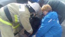 Под Смоленском из-за столкновения «десятки» с деревом погиб человек