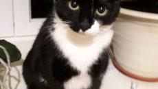 В Смоленске кота выгоняют на улицу после трагической смерти хозяйки