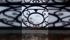 «Цветмет, однако»: под Смоленском ищут похитителей гербов с ограды моста