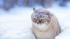 В Смоленске ожидается снежная пятница
