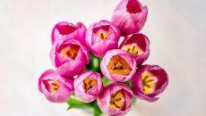 В Смоленске определены места торговли цветами к Международному женскому дню