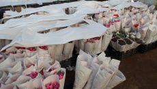К 8 марта в Смоленске откроют 18 мест официальной продажи цветов