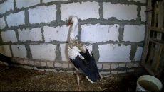В Смоленске жизнь пернатых обитателей приюта для животных сняли на видео
