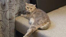В Смоленске организуют бесплатную вакцинацию кошек и собак от бешенства