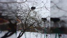 В Смоленскую область прилетели коты