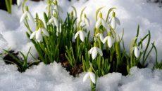 Синоптики рассказали о погоде в Смоленске в первый день весны