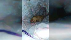 Смолянка нашла живого щенка, которого бросили в мусорный бак умирать