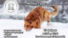 В Смоленске пройдет благотворительная акция по сбору помощи для бездомных животных