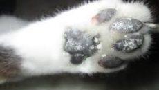 Смолянин нашел на улице пакет с мертвыми котятами