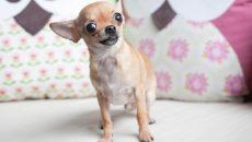 В Смоленске ветеринарная служба усыпила потерявшуюся домашнюю собаку — соцсети