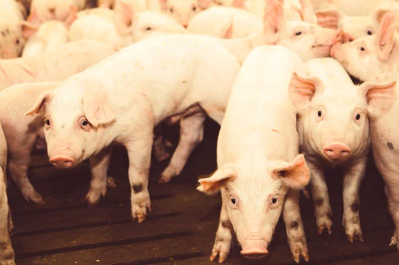 Мираторг, мясо, говядина, свинина, полуфабрикаты_6