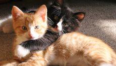 В Смоленске стал известен график бесплатной вакцинации домашних животных от бешенства
