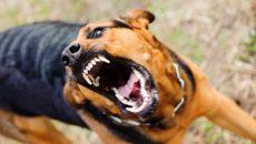 В Смоленской области с начала года зарегистрировано 12 случаев бешенства
