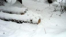 Под Смоленском «чёрного лесоруба» осудили за массовый вал деревьев в заповеднике