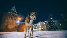 Самый известный пес Смоленска заболел