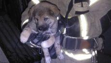 В Смоленске пожарные спасли щенка из горящей квартиры