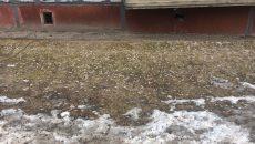 В Смоленске с приходом весны «активизировались» курильщики