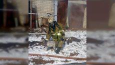 В Сети появились фотографии животных, спасенных при пожаре в Смоленске