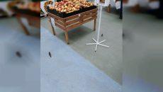 В Смоленске воробьи устроили пирушку в гипермаркете