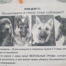 https://smolensk-i.ru/society/v-smolenske-doghanteryi-travyat-sobak_282592