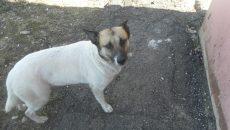 В Смоленской области после смерти пенсионерки родственники выкинули на улицу ее собаку