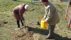 Во дворах Смоленска высадили около 700 кустарников