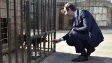 Смоленский сенатор ищет хозяев бездомным щенкам