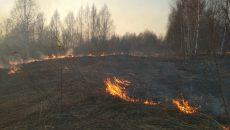 В Смоленской области в час появляется три очага возгораний сухой травы