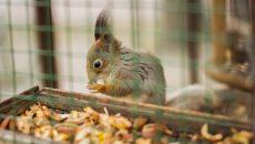 В Смоленске бельчата-обитатели парка прошли ветпроверку