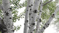 Под Смоленском обнаружили незаконную вырубку лиственных деревьев