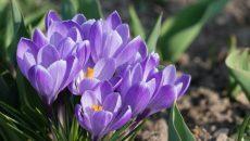 Синоптики рассказали о погоде в Смоленске на второй день апреля