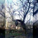 https://smolensk-i.ru/society/v-smolenske-obnaruzhili-zhivogo-drevesnogo-drakona_281872