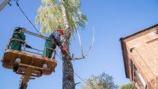 В Смоленске на Колхозной площади спилят деревья