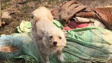 Под Смоленском верный пес продолжает охранять пепелище сгоревшего дома