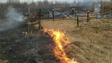 Под Смоленском неизвестные подожгли кладбище