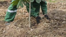 Стало известно, где в Смоленске высадят новые деревья