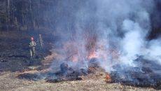 В Смоленске начали гореть леса