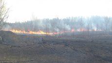 В Смоленске напомнили о запрете выжигания сухой травы