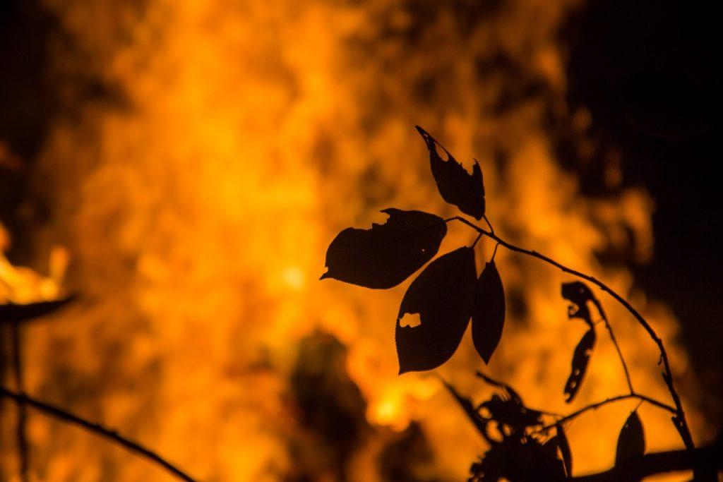 противопожарный режим (фото vk.com official_smolensk)