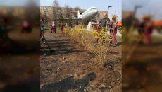 В смоленском сквере высадили более 100 цветов и кустарников