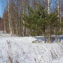 https://smolensk-i.ru/society/v-smolenskom-poozere-pereschitali-zhivotnyih_280441