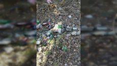 Жители Смоленска пожаловались на свалку возле детского сада