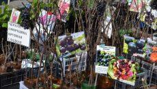 В Смоленске пройдет специализированная ярмарка «Сад-огород»