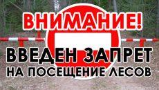В Смоленской области ограничили пребывание граждан в лесах